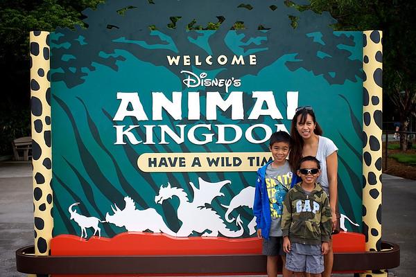 Animal Kingdom 2012