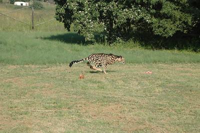 Ann van Dyke Cheetah Centre