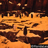 SeaWorld Orlando Antarctica - Empire of the Penguin (Photographer: Nigel Worrall)