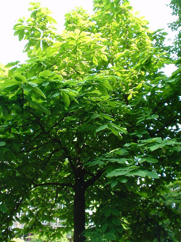 Bright green tree with huge leaves