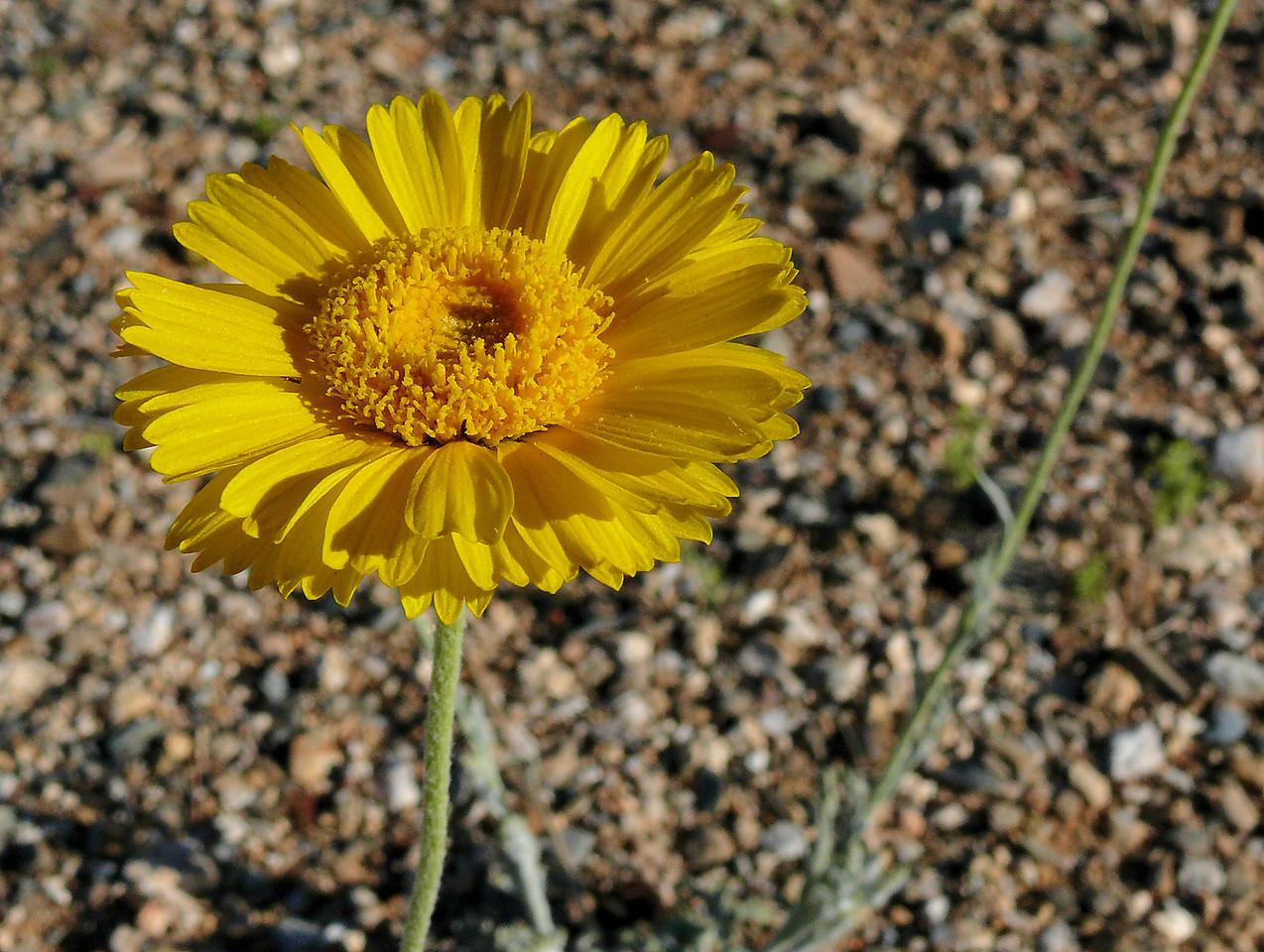 Wild Yellow Flower