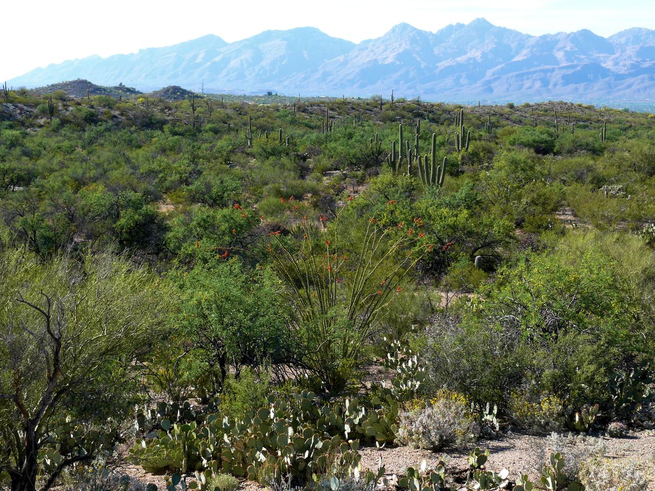 Green Desertscape