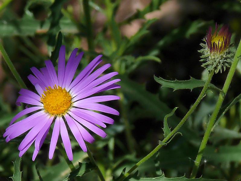 Violet Colored Flower