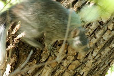 Supersonic Squirrel