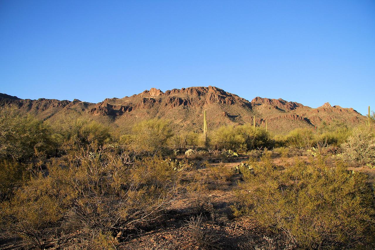 Saguaro National Park Landscape