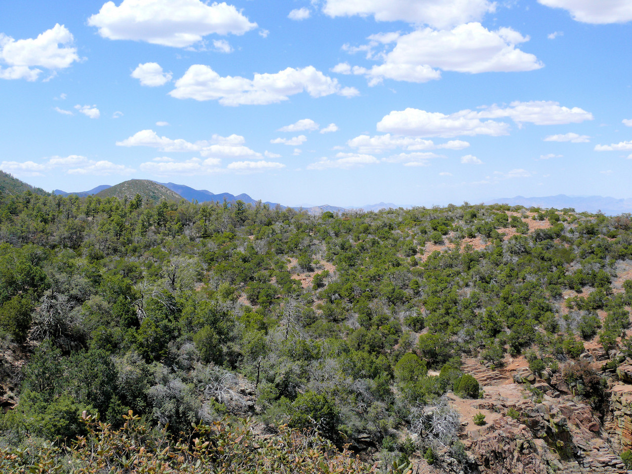 Arizona Alpine Forest