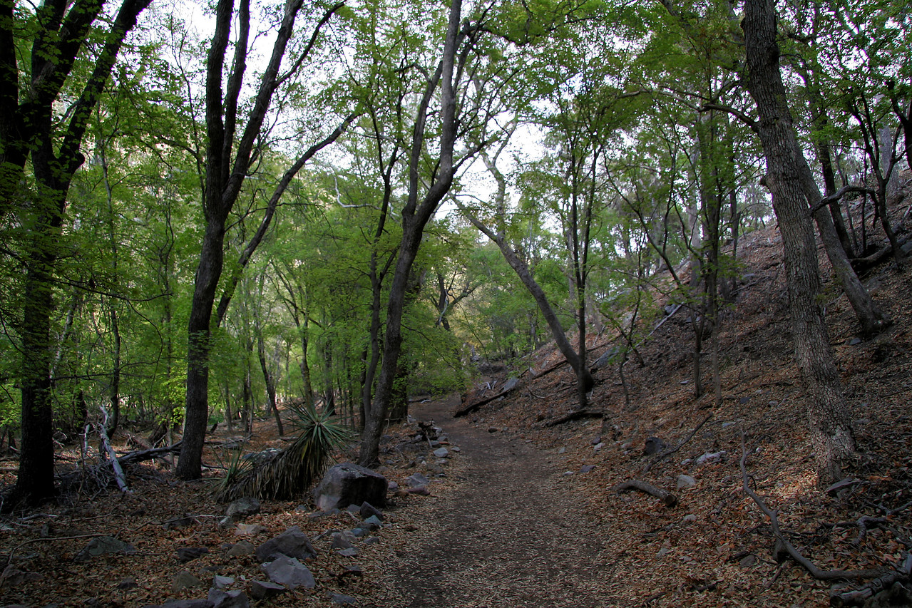 Shady Loop Trail