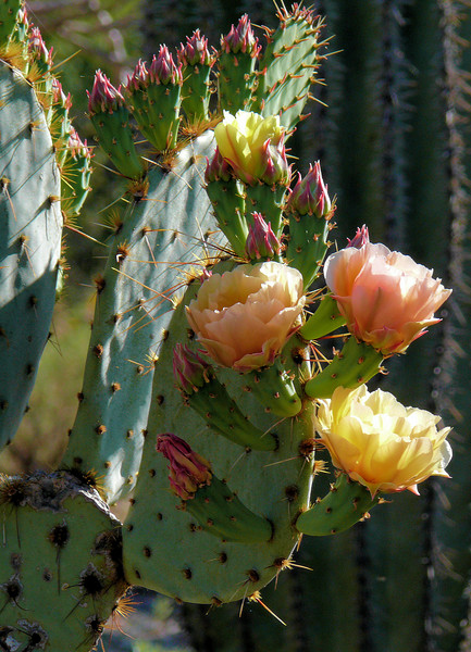 Cactus Blossum Boquette