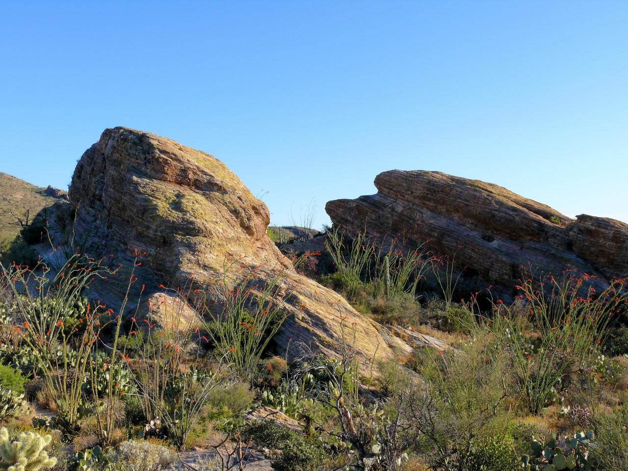 Blooming Ocitillio Rocks