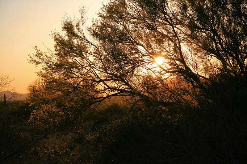 Palo Verde Sunset