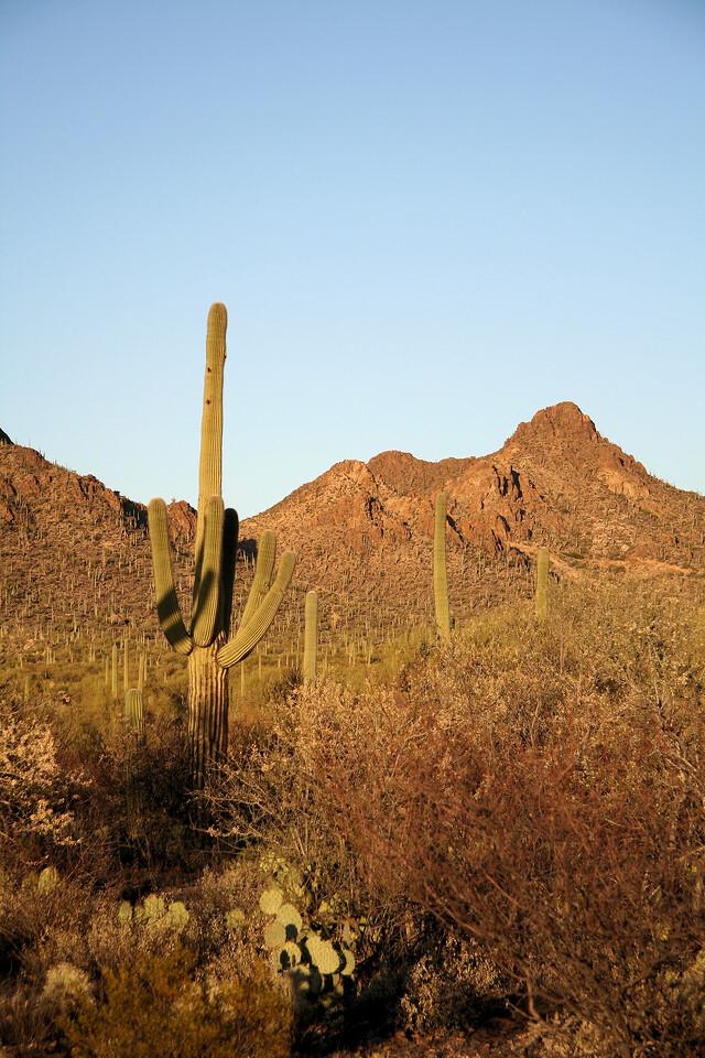 Cactus Peak