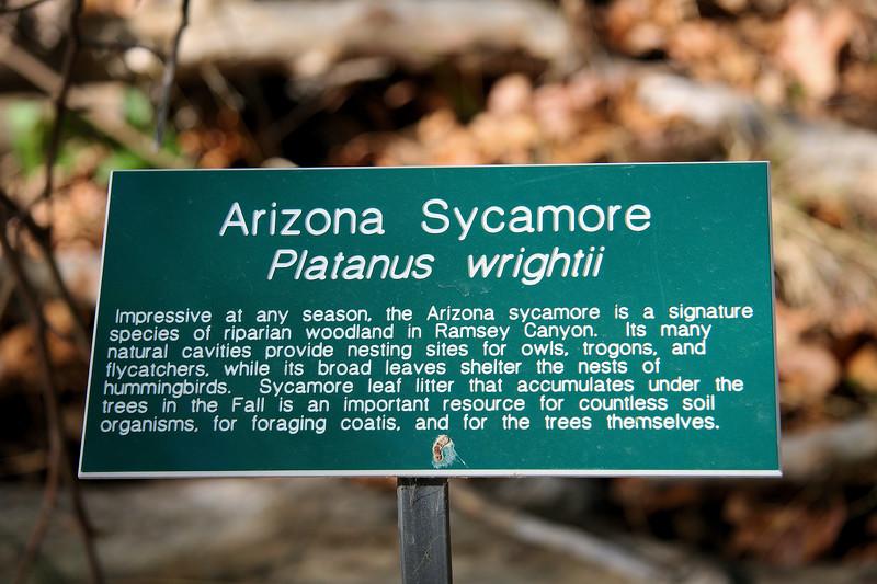 Arizona Sycamore Sign