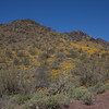 Cave Creek Regional Park, Cave Creek, AZ - March 28, 2008