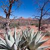 Sedona, AZ - March 29, 2008 -