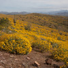 McDowell Mountain Regional Park, Fountain Hills, AZ - March 30, 2008