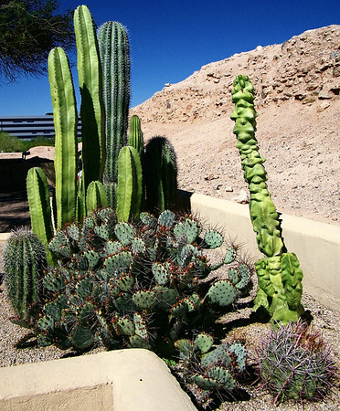 Arizoned: Pueblo Grande, 3-22-13