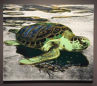 Andy Warhol's Nature Exhibit [Sea Turtle] @ Crystal Bridges Museum