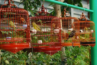 Po Street Bird Market