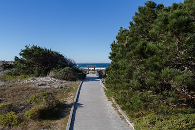 The walk to the beach from the Asilomar buildings.