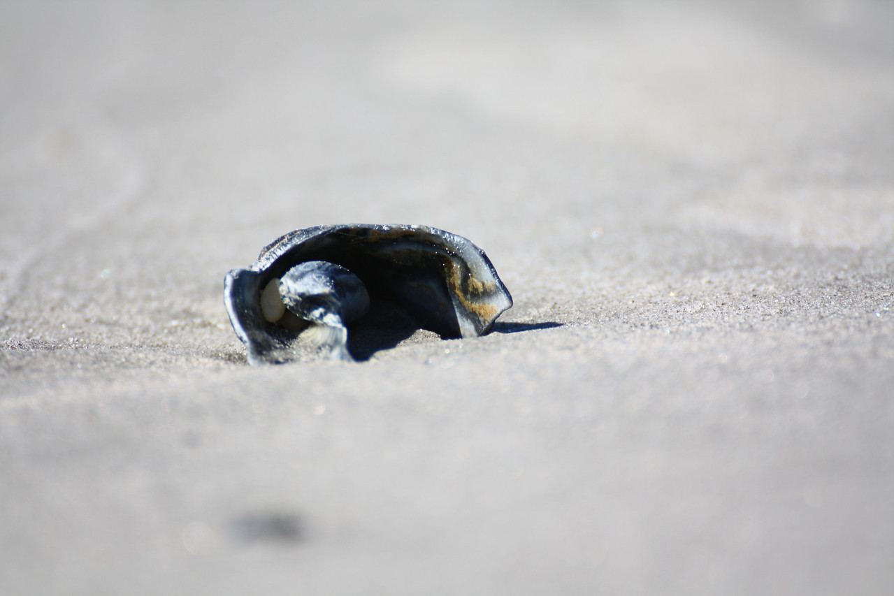 A shell washed up on the sand.