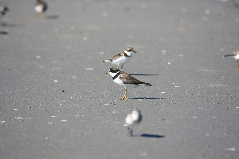 Birds on the beach.