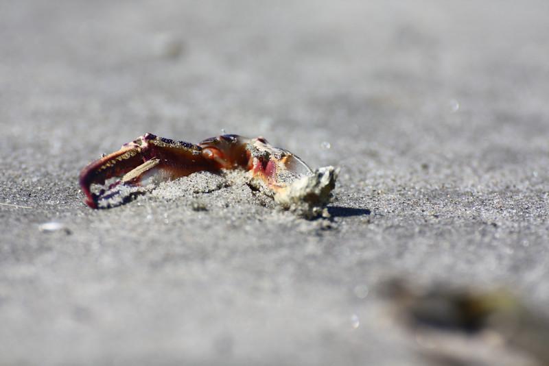 A crab claw.
