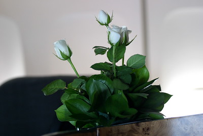 Fresh roses are in the center of the cabin.