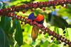 Lorikeet enjoying some nectar