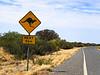 Kangaroos next 5km