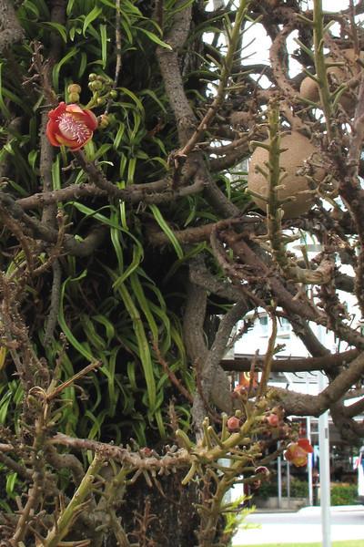 A Jumanji-like plant.