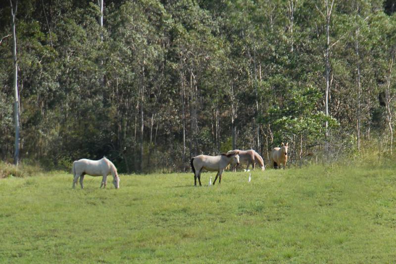Happy horses...