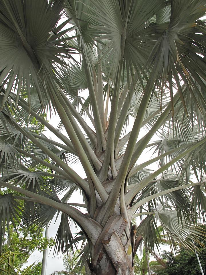 Beautiful palms live here...