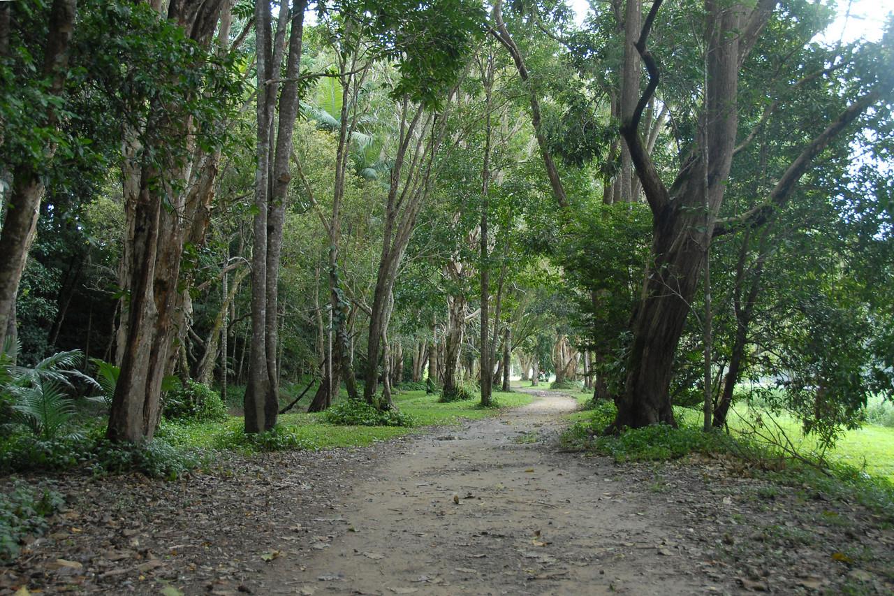 In Kuranda you can stroll a path along the river.