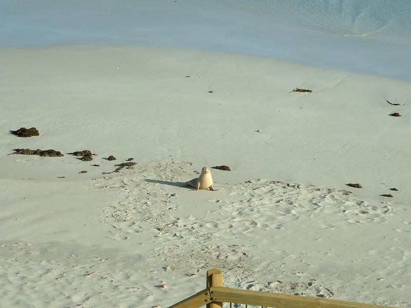 Sealions on Kangaroo Island