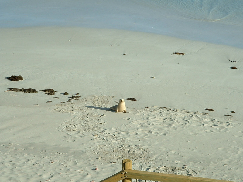 Sealions on Kangaroo Island