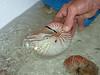 Nautilus Dyno test
