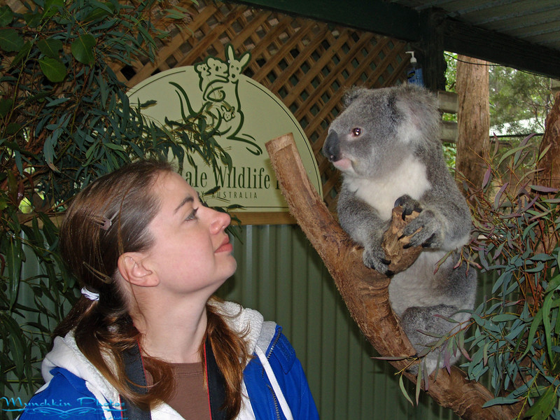 I believe the koala is cuter then me. It also probably wants a cookie.