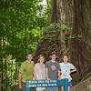 Daintree Forest - Mossman Gorge