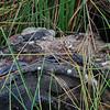 Python on the river's edge