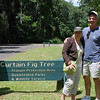 Walk to Curtain Fig Tree