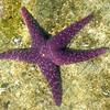 Pender Harbour Star