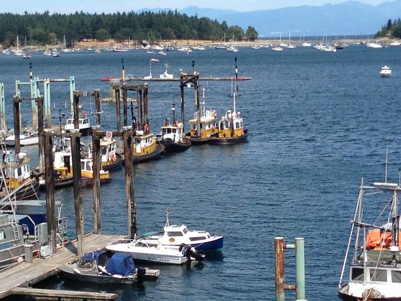 working docks at Nanaimo_ log rafting  tugs