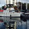 Kraken tucked in to Island Breeze_Nanaimo
