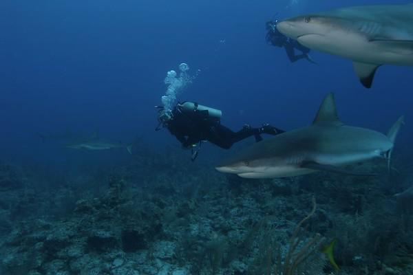 Bahamas 2004