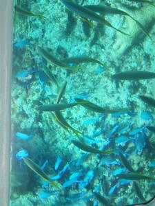 Fish, fish, fish, fish, fish, fish, fish, fish.