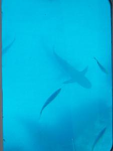 Bye, bye, sharks.