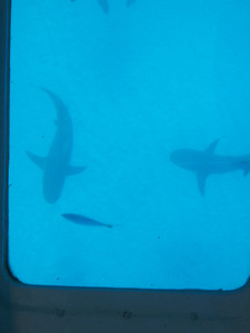 Dude, more sharks.