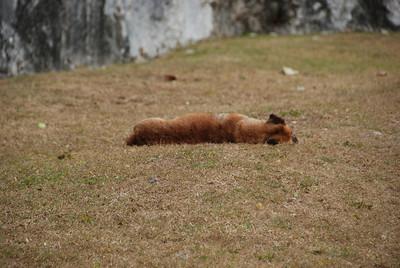 Guard dog hard at work