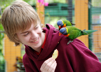 Jeremy feeds the parrots.