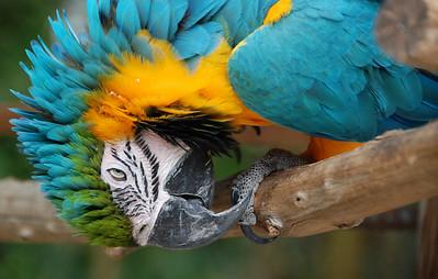 Peeking parrot
